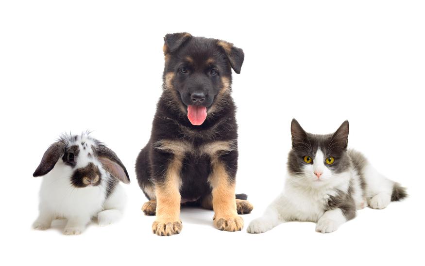mascotas, perrito, gato, conejo